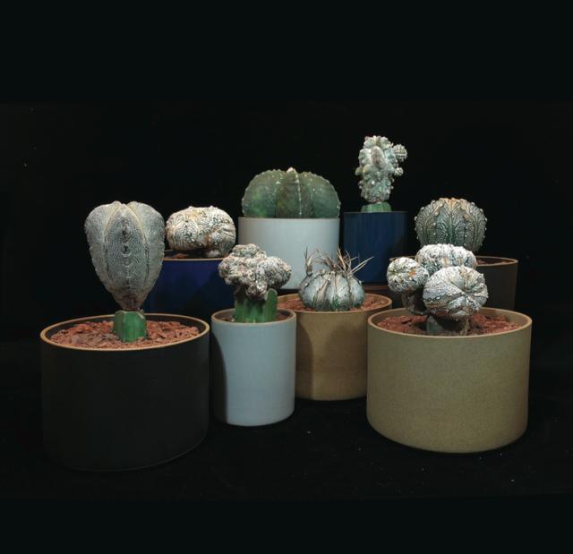 cactus_hasami_image