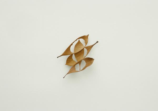 mitsuru_koga_leaf02