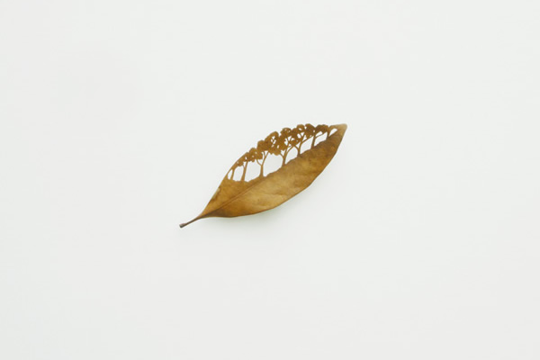 mitsuru_koga_leaf05